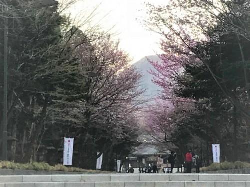 北海道神宮の表参道も