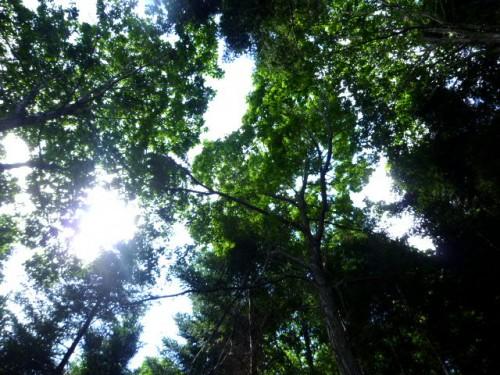 木漏れ日も心地よく
