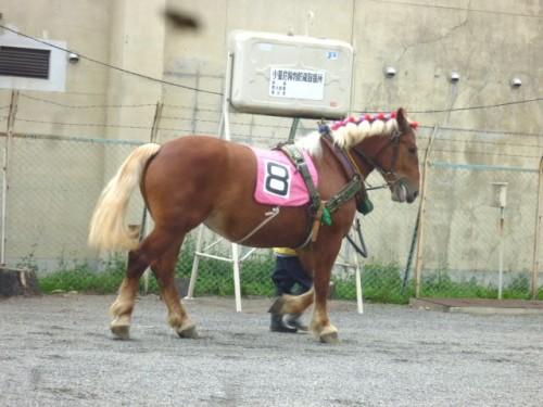 装鞍所からパドックに向かう馬