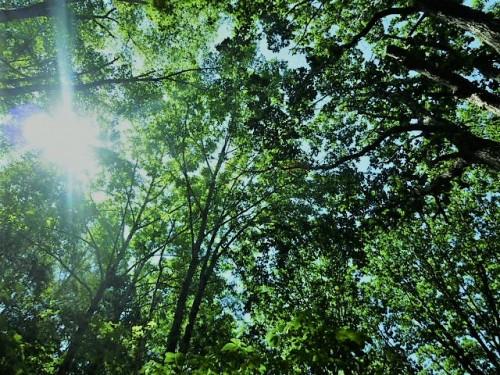 木漏れ日が気持ちよく