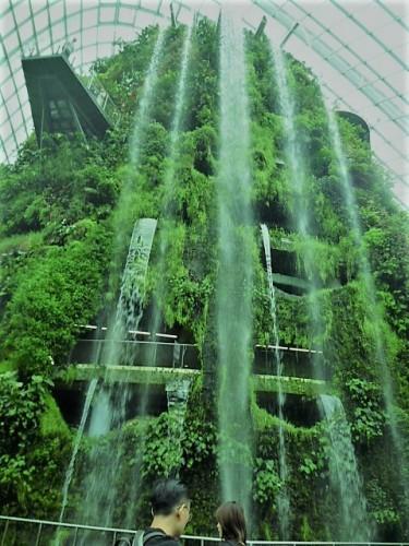 空中植物園