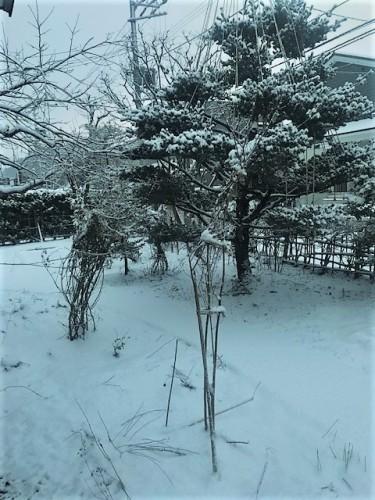 札幌はまた雪が