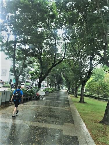 街路樹も立派
