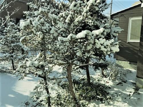 新雪ががうっすら積り