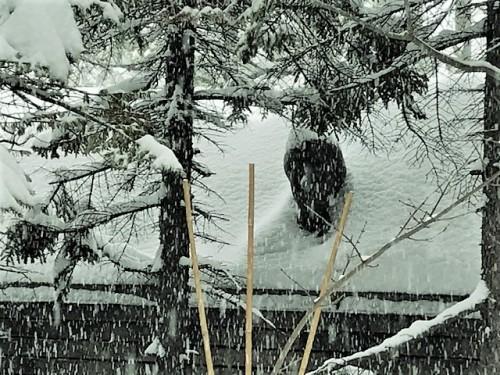 降りしきる雪の中で!